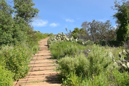 Wood steps leading up a hillside in Irvine Regional Park, Orange County, California.