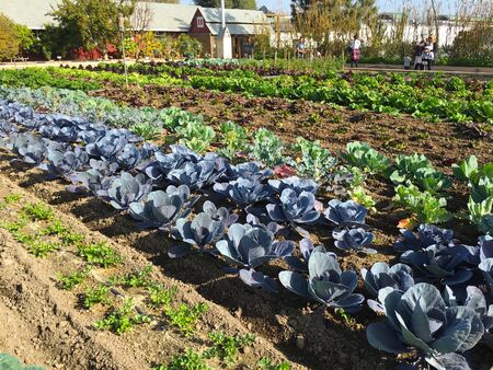 COSTA MESA, CA - JANUARY 7, 2018: Demonstration Garden at Centennial Farm, the agricultural educational area of the OC fair and Events Center.