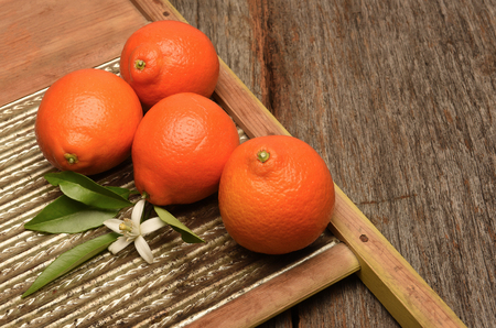 Minneola Tangelos on a rustic wood and metal surface. The fruit is a cross between a Duncan grapefruit and a Dancy mandarin. Reklamní fotografie