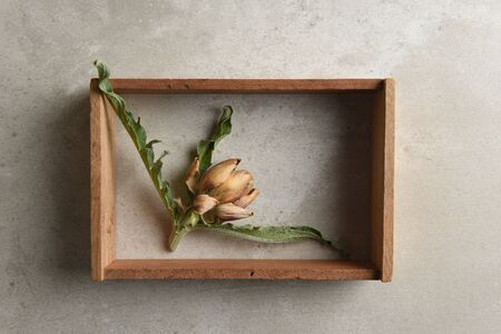 A small dried artichoke in a shadow box on a mottled gray tile surface.  Reklamní fotografie