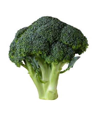 A head of Broccoli isolated on white.