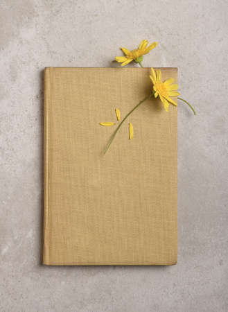 Two Yellow Daisy like flowers and old book and aged parchment . One flower being used as a book mark. Stockfoto