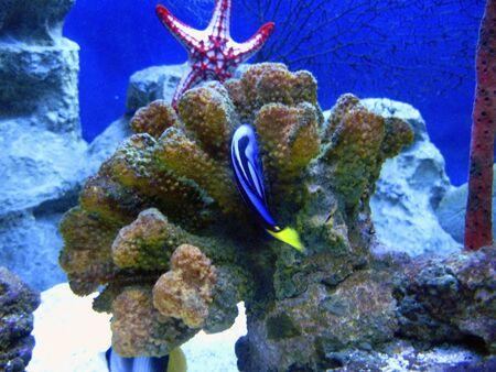 Blue fish and star underwater Stock Photo