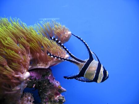 Tropical exotic fish photo