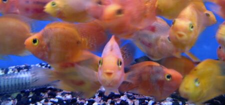 Tropical exotic fishes Stock Photo - 10743590