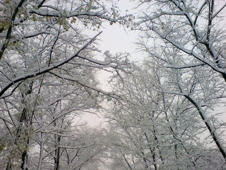 First snow on the trees