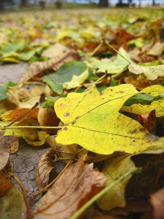 Yellow fallen leaf cover the dark ground Stock Photo