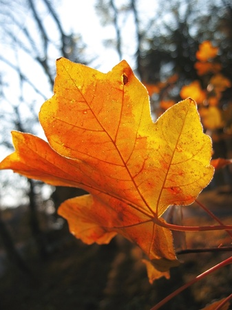 Lonely yellow leaf on the autumn tree photo
