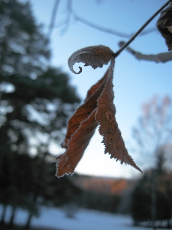 Red frozen leaves and cold winter morning photo