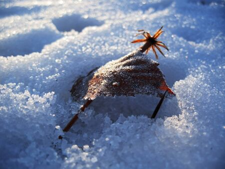 Red frozen leaf and cold winter morning Stock Photo - 11595642