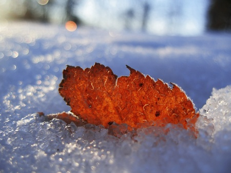 Red frozen leaf and cold winter morning photo