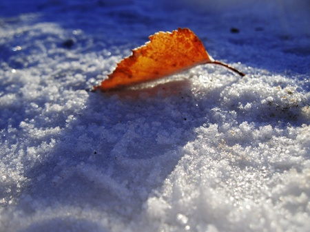 Red frozen leaf and cold winter morning Stock Photo