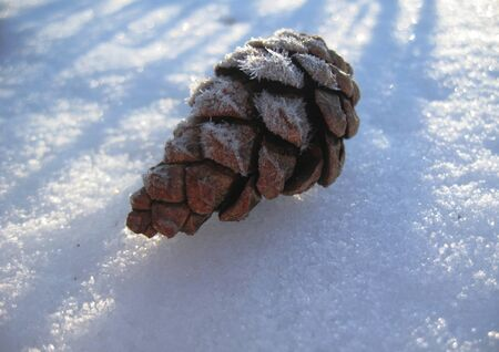 Pine cone laying on the white snow Stock Photo - 11595614