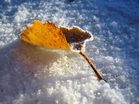 Red frozen leaf and cold winter morning Stock Photo - 11595515