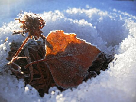 Red frozen leaf and cold winter morning Stock Photo - 11793171