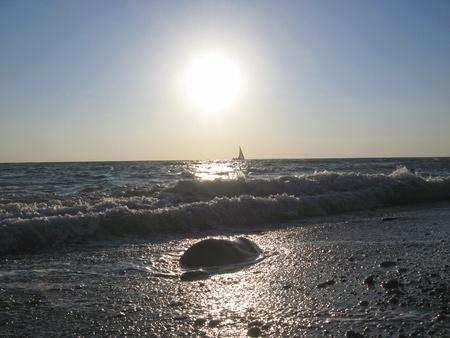 drifting: Lonely sail drifting under the big sun