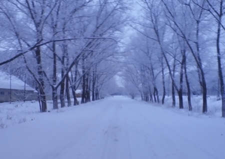 Frozen road between the tree alley lead to nowhere Stock Photo - 12659901