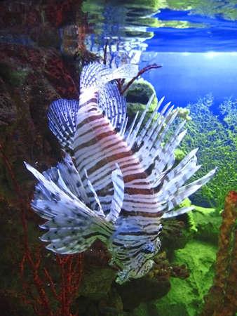 Tropical exotic fish underwater near the bottom photo