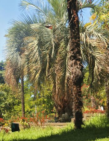 Palm tree growing in the summer park  Tropical nature photo