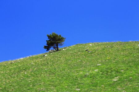 Lonely tree growing on the slope of the mountain photo