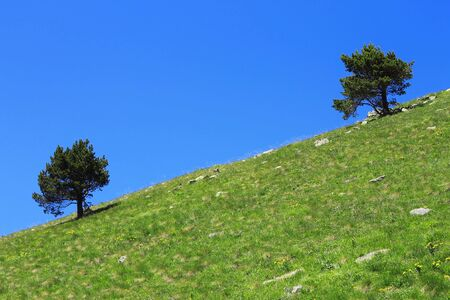 Pair lonely trees growing on the slope of the mountain photo