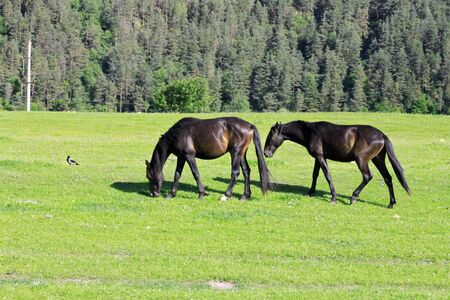 Horses on the meadow eat the grass photo