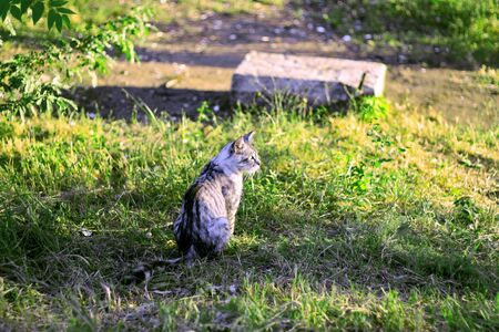 Grey cat sitting on the a summer mountain meadow photo