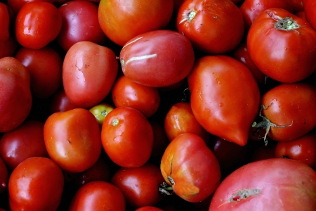 Red tomatoes photo