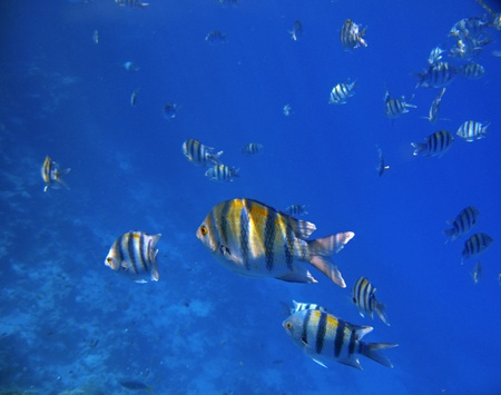 Tropical exotic fishes underwater  The Red sea Stock Photo - 20418356