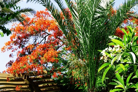 A tropical exotic plants against blue sky photo