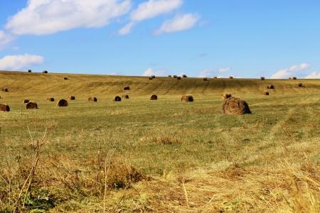 Straw roll bale on the field of farmland photo