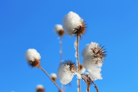 Flower with a pins under the snow against blue sky photo