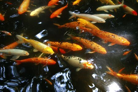 chinesse: Tropical Exotic Fish underwater. A China travel