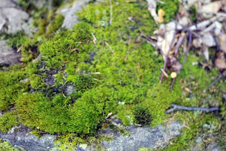 Natural stone background texture with green moss
