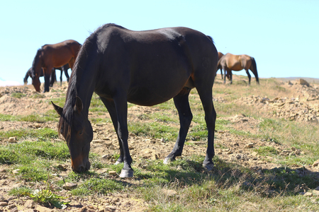 A Horses On The Autumn Caucasus Meadow
