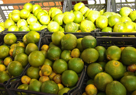 Green mandarine fruit on the asian market in black plastic boxes