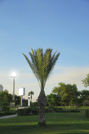 Green palm tree growing in the subtropical park