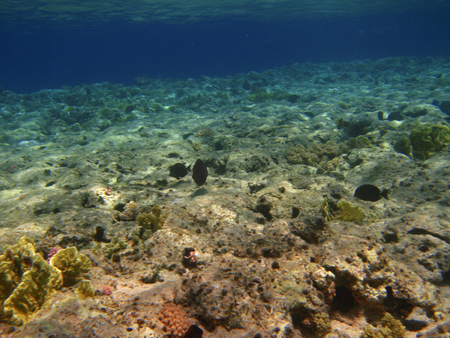 Corals at the bottom of the Red Sea with fishes and clear water