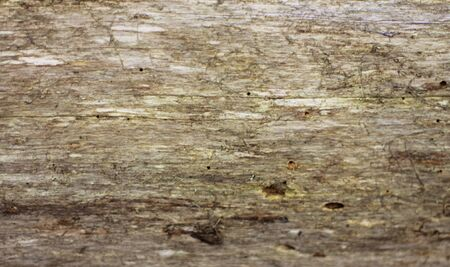 A Wooden background textured horisontal pattern in grey colors
