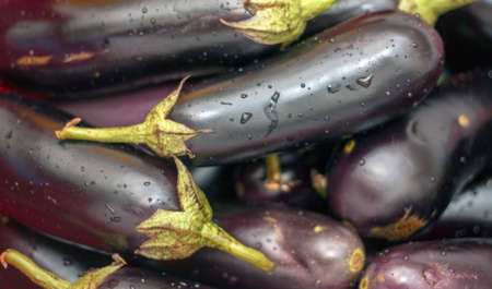 A harvest of fresh black eggplant with stems and water drops closeup Stock fotó