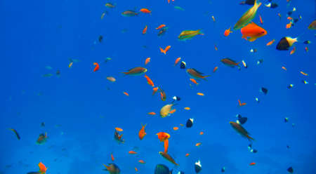 Small tropical exotic fishes different colors and types moving over the reef underwater of Red sea Egypt Stock fotó - 158581267