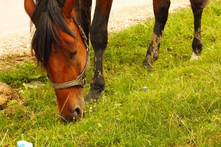 Horse grazing On The Caucasus green Meadow summertime