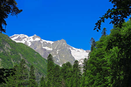 The Caucasus Mountains Peaks Under Snow And Clear Blue Sky and green forest foreground summer time Stock fotó