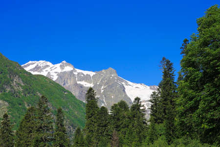 The Caucasus Mountains Peaks Under Snow And Clear Blue Sky and green forest foreground summer time Russian Federation Stock fotó