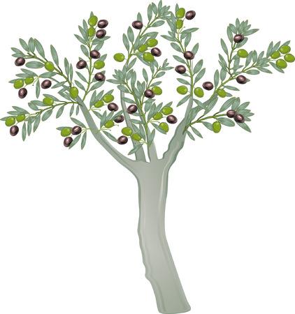 olive farm: olive tree  Illustration