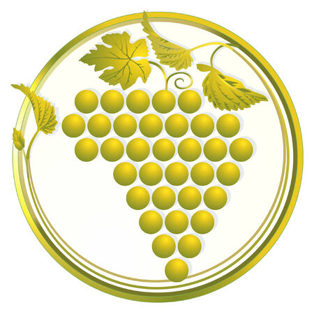 grapes on vine: golden grapes
