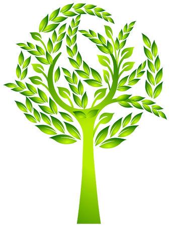 arbre     ? � feuillage persistant: arbres � feuillage persistant