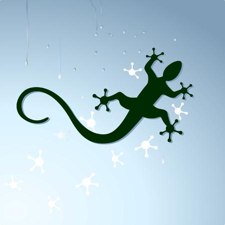 salamander: Gecko zu kriechen