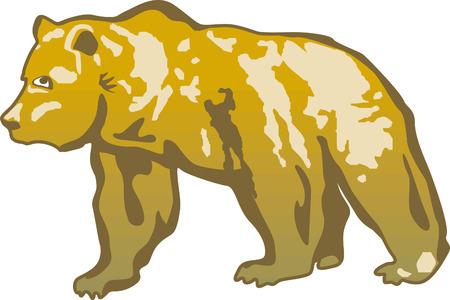 ferien: brown bear