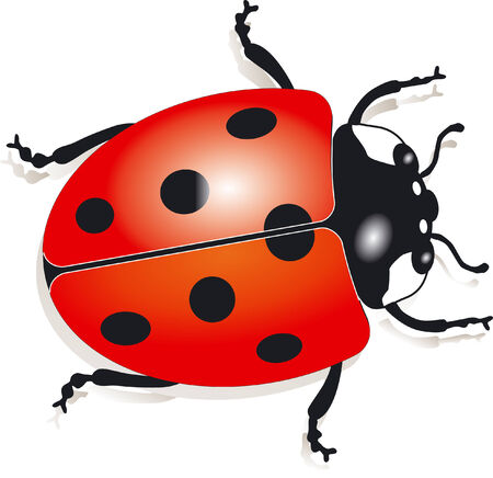 ladybird  Stock Vector - 6594239